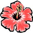 Hawaii Oahu vacation rentals -- Hibiscus Flower